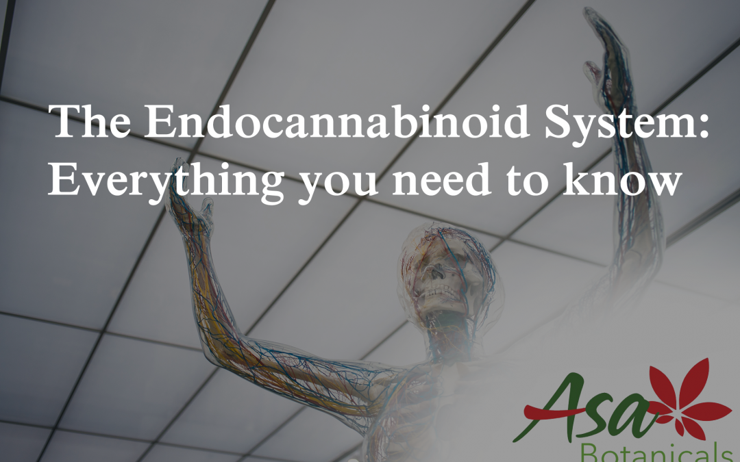 The Endocannabinoid System: Everything you need to know