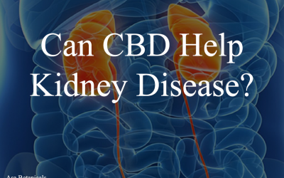 Can CBD Help Kidney Disease?